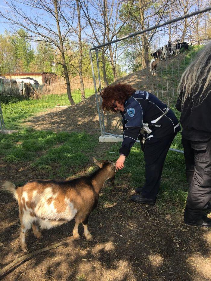 Testuggine rara salvata dalla Municipale a Modena in via